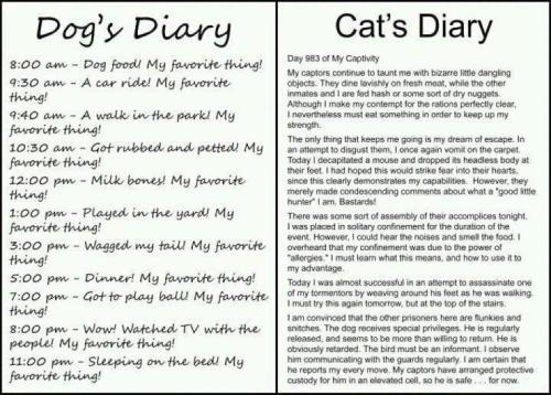 dog's diary (1)